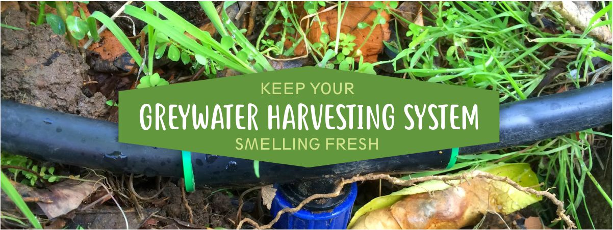 Keep your Grey Water Clean and Odourless - Invest in a Greywater system