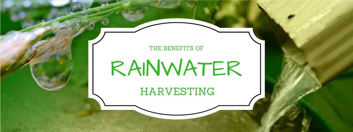 Rainwater Harvesting in South Africa
